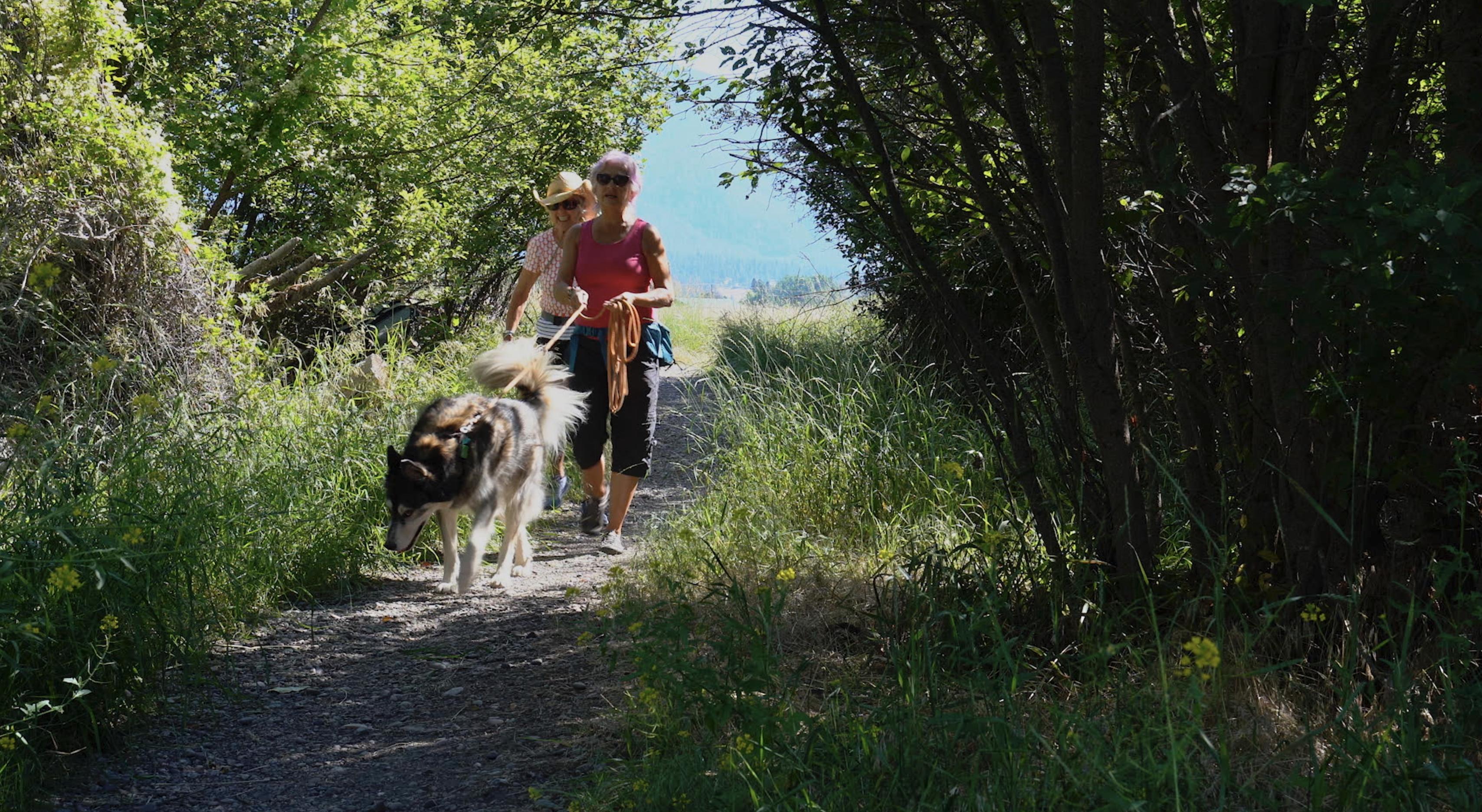 Dog walkers in summer